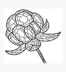 Image result for cloudberry drawing