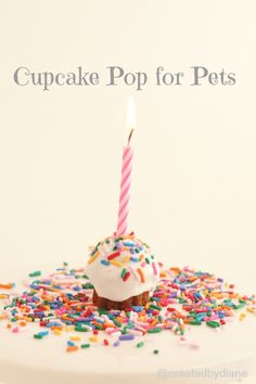 How to make a no-bake cake pop for your dogs