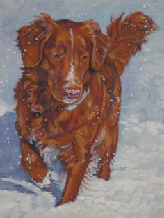 Nova Scotia Duck Tolling Retriever toller art print by TheDogLover, $39.99