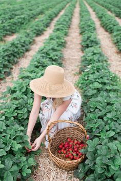 Checking off a Summer bucket list item in my favorite floral dress Strawberry Farm, Strawberry Picking, Strawberry Fields, Strawberry Patch, Country Farm, Country Life, Farm Lifestyle, Fruit Picking, Blue Nail