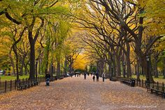 Autumn in Poets Walk, New York