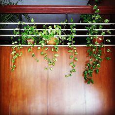 Plants plants everywhere.