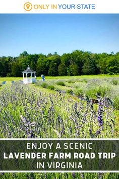 Take a fun and fragrant road trip to the best lavender farms and fields in Virginia. You can pick your own flowers, enjoy beautiful views, find great gifts, and more. Best Bucket List, Spring Break Vacations, Lavender Fields, Haunted Places, Small Towns, Day Trips, Farms, Maryland, Virginia