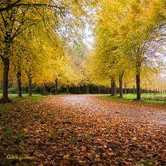A U T U M N time Autumn Leaves, Country Roads, Explore, Flowers, Art, Art Background, Fall Leaves, Kunst, Autumn Leaf Color