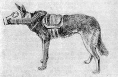 Drawing of a dog with gas mask from WW1.