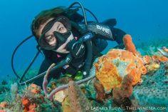 Katie Sandidge - PADI Divemaster, Sirena Crew