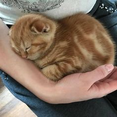 it) submitted by matyobi to /r/catpictures 0 comments original - - Cute Kittens - LOL Memes - in Clothes - Kitty Breeds - Sweet Animal Pictures Cute Kittens, Cats And Kittens, Kitty Cats, Derpy Cats, Baby Kitty, Cats Meowing, Sleepy Kitty, Cute Baby Animals, Animals And Pets