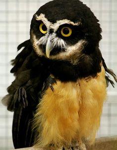 When you wanted to be a toucan... / Wanneer je stiekem een toekan wou zijn..