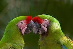 Resultado de imagem para animais exoticos
