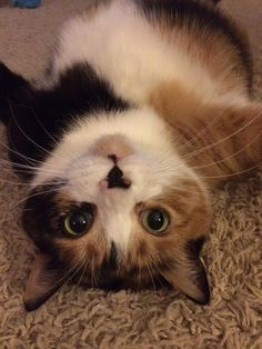 """""""Here is a 'selfie' of my wonderful and somewhat 'special' big girl, Georgy. She does lots of weird things that get photographed so I'd love to see her big face out there somewhere! Photo taken by ..."""
