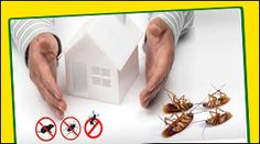 General pest control is the service rendered by us, bestow inclusive service to get rid of the pests like termites, cockroaches, rodent, wood borer, weed, etc #generalpestcontrol #pestcontrolahmedabad
