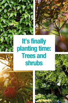 Now is the time to act! Plant your trees and shrubs to get great results the upcoming years. Learn everything you need to know in our article.
