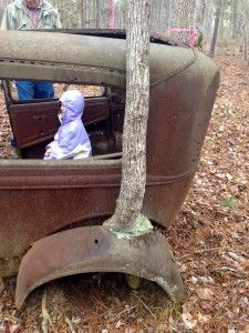 A tree growing out of an old abandoned car.