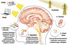 Der Hamoni® Harmonisierer Der hochwirksame Schutz gegen Elektrosmog