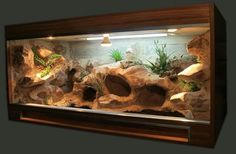 Best Absolutely Free Reptile Terrarium habitats Popular There isn't any doubt of which creating a pet may bring uncounted fulfillment so that you can someone else's l. Best Absolutely Free Reptile Terrarium habitats P Terrarium Diy, Terrariums Gecko, Lizard Terrarium, Bearded Dragon Vivarium, Bearded Dragon Terrarium, Bearded Dragon Habitat, Reptile Habitat, Reptile Room, Reptile Cage
