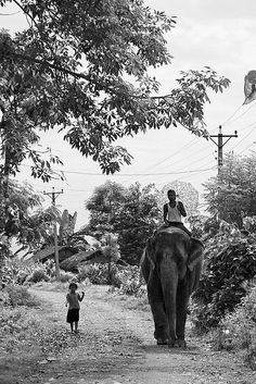 Friends, Royal Chitwan National Park, Nepal, by Tracy Sparkes