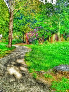 Mottled path | by grove.ayers