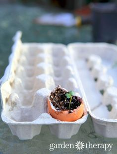 Is starting seeds in eggshells really the best way to start your plants? Find out in this post.