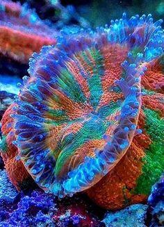 Sea anemones are marine, predatory animals related to corals and jellyfish. Saltwater Aquarium Setup, Tropical Fish Aquarium, Saltwater Tank, Marine Aquarium, Marine Fish, Reef Aquarium, Underwater Creatures, Underwater Life, Ocean Creatures