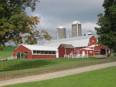 Modern dairy farm