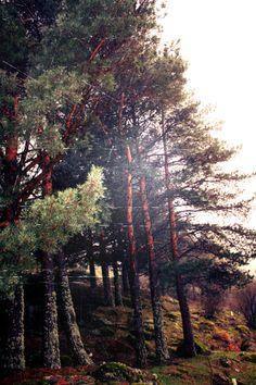 Guadarrama Forestal