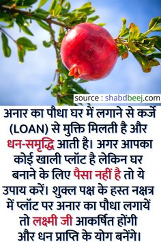 Vedic Mantras, Hindu Mantras, Gernal Knowledge, Knowledge Quotes, Healthy Diet Tips, Good Health Tips, Money Prayer, Interesting Facts In Hindi, Lucky Plant
