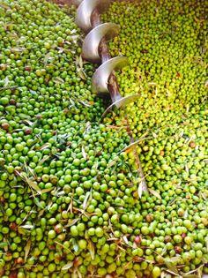 La spremitura delle olive #BaglioRacasale