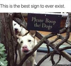 Funny animal pictures compilation for you. Check these top 44 hilarious animal pictures of the day that will make you LOL every time. Funny Animal Memes, Dog Memes, Funny Animal Pictures, Cute Funny Animals, Funny Cute, Funny Dogs, Cute Dogs, Funny Memes, Hilarious Sayings