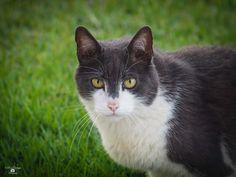 Pom Pom... - My Mothers Cat, Pom Pom, :)