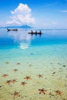 Starfish!!! Semporna, Sabah in Borneo, Malaysia