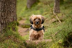 Despite its name, the breed is not classified as a Terrier under Kennel Club standards, but is considered the original herding dog, hailing from the monasteries of Tibetan monks over years ago. Tibet Terrier, Terrier Breeds, Terriers, I Like Dogs, Herding Dogs, The Magicians, Cat Lovers, Fitness, Look