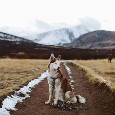 a gal + her two dogs | freelance photographer | outdoor + taco enthusiast | colorado.