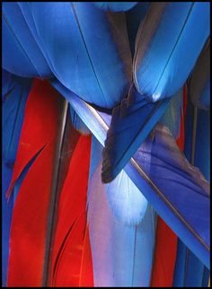 Macaw feathers...