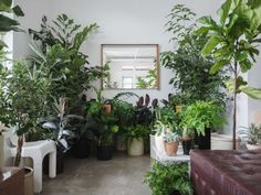 homesteadseattle: last day of our plant pop-up 🌿 2202 e olive st, 12-6