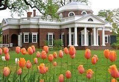 Tulipanes en los jardines de Monticello cerca de Charlottesville, VA - 10…