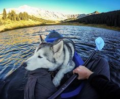 Nap hard, paddle hard. We're paddling out to Tahoe this weekend for a rad time with our @gopro family! Stay tuned. #GoPro by loki_the_wolfdog