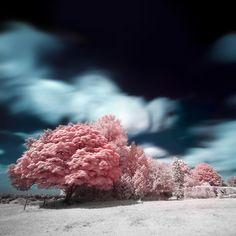 zephyr tree photography - gorgeous trees!