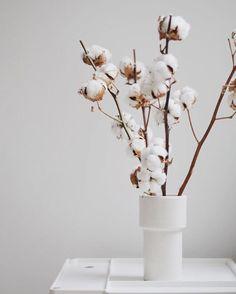 Fleurs de coton.