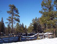 Pinetop, Arizona ~ So many family members buried here. I want to live here someday.