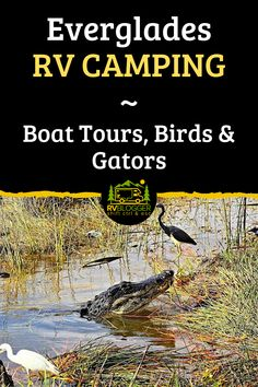 Everglades National Park is a must see vacation destination, but don't go before you read this. This article is filled with great tips on the best time of year to go, campground reviews and adventurous things to do like boat tours. Check out the Everglades National Park Webcam along the Anhinga Trail. #rvblogger #everglades #evergladesnationalpark #evergladecamping #floridacamping #nationalparks #rvdestinations #rvparks #evergladesboattour #rvtravel #rvtips
