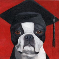 boston terrier hat | Recent Photos The Commons Getty Collection Galleries World Map App ...