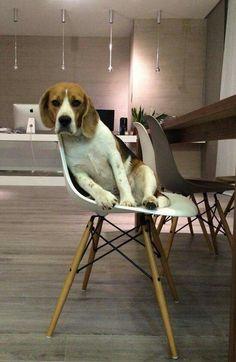Thoroughly Modern Beagle!