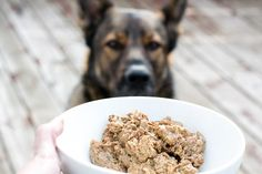 7 steps to stop food aggression in dogs