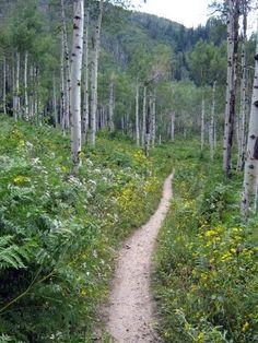 Spring Creek Mountain Bike Trail - Steamboat Springs - Best single track I've ever ridden