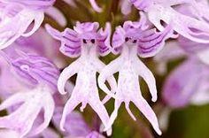 Image result for narilatha flower