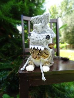 Shark Costume for Cats and Extrasmall Dogs   Poor little thing looks like he's being eaten by a shark!