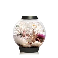 Biorb setup ideas- That looks really effective. Please see our biOrb accessories for more ideas. http://www.gardensite.co.uk/Aquatics/BiOrb_Ornaments/