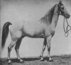 Djerid, 1871