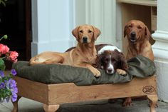 Every dog deserves a throne! Check out this #Weebly site and find the perfect bed for your pooch! Weebly PHOTO PHOTO GALLERY  | SCONTENT.FPAT3-1.FNA.FBCDN.NET  #EDUCRATSWEB 2020-03-13 scontent.fpat3-1.fna.fbcdn.net https://scontent.fpat3-1.fna.fbcdn.net/v/t1.0-9/s960x960/89468368_1755750194568092_6321885637133729792_o.jpg?_nc_cat=106&_nc_sid=8024bb&_nc_oc=AQlMfpuFZVXkhuDk9Uz8zH00lGfHL3-cLVgSRXuL6dqxnbk6QiijZo8tt0BtNozaXYD57igSlfMEUluVwU8c78QF&_nc_ht=scontent.fpat3-1.fna&_nc_tp=7&oh=8d4a8bf64ef35fbccd34db382ed91199&oe=5E913C58