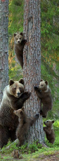 Beautiful Bear Family